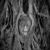 Embedded history, Ayutthaya, Thailand